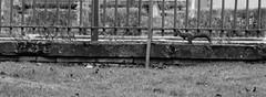 Hiver jardin des plantes Janvier 2016-6 (Frdric THIBAUD Photo) Tags: squirel cureuil
