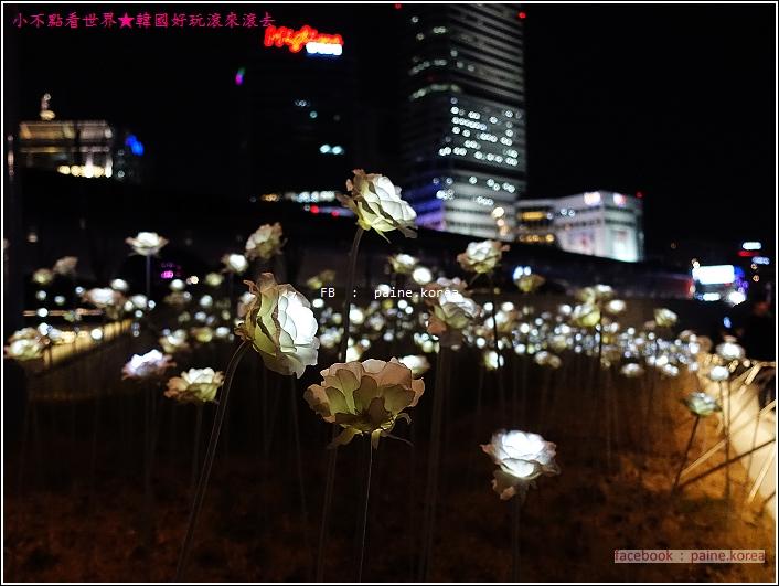DDP LED玫瑰花展