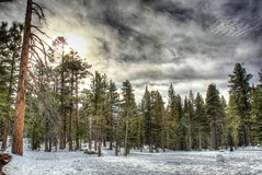 Mountain Escape (Spebak) Tags: california trees sun mountains pine clouds sunrise canon palmsprings tram socal coachellavalley canondslr sanjacinto palmspringsaerialtramway canon30d spebak