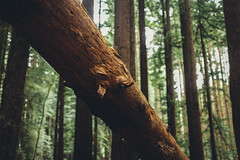 My log has something to tell you (Louis Dazy) Tags: trees nature forest high log woods wanderlust trunk