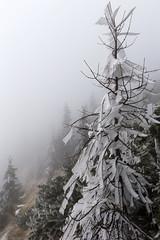 _MG_1045 (schamrock77) Tags: winter italy mountain ice freezing natura inverno montagna friuli ghiaccio galaverna canon6d 35f2is