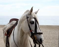 White horse (pauli.lazo) Tags: blue sea horse naturaleza blanco nature azul caballo mar andaluca nikon almera beatiful alegra nikonusers nikonistas