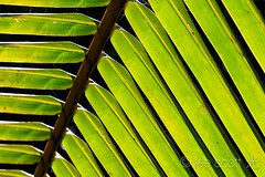 4X0A6081 (lee scott ) Tags: usa nature outdoors island happy hawaii calming kauai hawaiian tropical leescott islandlife feelgood moloaa islandview rightsmanaged goodfeelings sponataneous moloaabay spontaneousmoments lightsourcephotographybyleescott