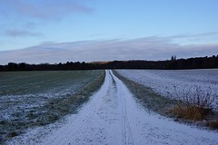 Winter is more or less back (osto) Tags: denmark europa europe sony zealand scandinavia danmark slt a77 sjlland osto alpha77 osto february2016
