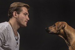 HS_Basti und Kira_II-47 (butchinsky) Tags: dog germany studio munich mnchen hund kira rhodesianridgeback basti helli junghund hundefotografie butchinsky jungdog