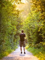 summer 2015 (Christoph Kampf) Tags: family light summer warm photographer bokeh father corridor tunnel foliage tele 28 80200
