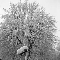Snowtree (rotabaga) Tags: blackandwhite bw göteborg diy lomo sweden gothenburg sverige tmax400 lubitel166 svartvitt r09 bwfp