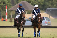 Polo (rdlt) Tags: horses horse sports sport canon caballo caballos photos outdoor sigma pony deporte polo equitation equino equinos 70d