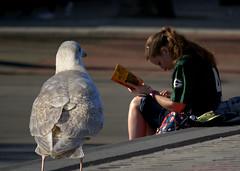 A James Patterson Novel (swong95765) Tags: bird girl book reader seagull gull read novel