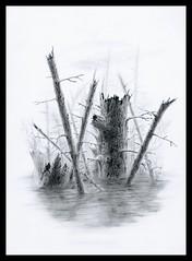 Swamp (Karwik) Tags: trees tree water pencil pencils drawing swamp bagno woda drzewo owek rysunek olowek moczary
