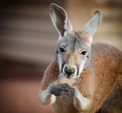Excuse me, Sir... (asPHOTONICS) Tags: nature animals zoo funny sweet