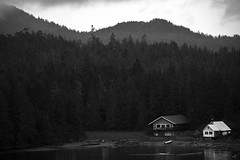 What lies in the forest? (francography) Tags: blackandwhite bw alaska forest landscape noir moody dramatic potd