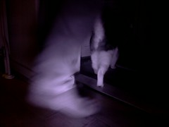 20160207-174712-i-1 (Catflap central) Tags: camera dog pet cats woof cat pi raspberry meow doggie catdoor catflap kattenluik katzenklappe catflapj2nnl taggingasdoguntilautotagginghasanoptout robotaggingisthedevil