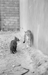 Cats, Bandar Abbas, Iran (Behsa) Tags: cats iran middleeast bandarabbas
