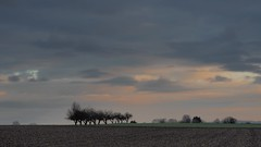 My daily Route I (nazim1505) Tags: trees 2 tree nature germany out landscape deutschland mark cam natur olympus 45 ii 169 landschaft bume zuiko baum 45mm ludwigsburg omd markii stille mark2 ruhe em5 outofcam benningen em5ii