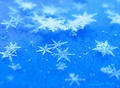 160225 cnm 160226 © Théthi ( 7 pics ) (thethi (pls read my first comment, tks)) Tags: neige froid macro cristal février namur wallonie belgique belgium setvosfavorites bestof2016 setwater setnamurcity ruby10 faves86 setfevrier 85faves