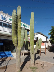 La Constitución (sraanasol) Tags: mexico bajacalifornia baja ciudadconstitución