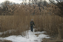 Small boy in a tall reed (Daria Markova) Tags: reed tim spring oldgrass