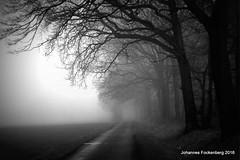 Morgennebel (grafenhans) Tags: white black nebel strasse sony alpha 700 tamron wald weiss bume baum schwarz a700 alpha700 grafenwald 281750