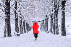 Girl with umbrella walking on the path and row trees. Winter. (tawatchaiprakobkit) Tags: park wood autumn trees winter red woman white snow storm black cold fall leave nature girl beautiful weather forest umbrella season landscape outdoors person sadness one back solitude frost alone path walk coat go perspective snowstorm young scene clothes trail walkway silence covered lonely wintertime snowfall sorrow chill
