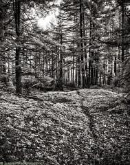 The Mima Mounds (mjardeen) Tags: bw white black texture strange landscape ir washington pattern outdoor sony 28mm mima spooky glaciers infrared wa converted f2 mounds 282 720nm lifepixel landscapesshotinportraitformat niksilverefex
