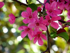 Survivors (Bill Steffen) Tags: tree floral stlouis forestpark