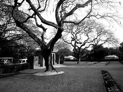 Mainamoti war cemetery Comilla (camerahood1) Tags: dhaka bd bangladesh rayhan