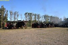 DS_TractionEninges_2_McLeansIsland_09April2016 (nzsteam) Tags: price train island traction engine railway scene steam engines locomotive boiler boilers mcleans sawmilling