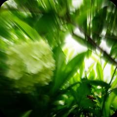Zzzzzz (ghiro1234 []) Tags: verde primavera vespa zoom 11 fiori fioritura divertissement nelmiogiardino focalzoom