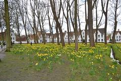 The Begijnhof, Bruges. (greentool2002) Tags: bruges begijnhof