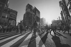 WALK (ajpscs) Tags: street people blackandwhite bw blancoynegro monochrome japan japanese tokyo blackwhite shinjuku crossing outdoor walk streetphotography monochromatic  nippon  greenlight blkwht grayscale  monokuro ajpscs nikond750