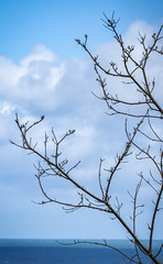 24/30: Tree with a sea view (judi may) Tags: blue sea sky tree water clouds branches norfolk bluesky minimal simplicity simple twigs canon7d april2016amonthin30pictures