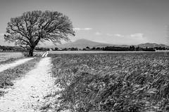 Serignan-du-Comtat (josefajardo84) Tags: ventoux dentellesdemontmirail