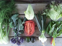 Suzie's CSA Box, Week of April 4 - 10