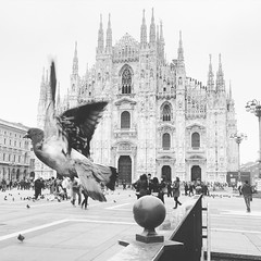 "Duomo Milano (""ricardahannemann"") Tags: street italien blackandwhite bw italy canon happy nikon flickr dom milano explorer explore duomo taube variation iphone mailand flickrexplorer schwarzweis mailnderdom lombardialombardei"