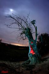 troll tree (jrandet) Tags: longexposure nightphotography tree clouds arbol huesca troll olivo largaexposicion fotografianocturna fotografiacreativa jrandet