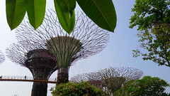 Supertrees (stardex) Tags: sky plant tree leaves garden leaf singapore marinabay skytree gardensbythebay supertree