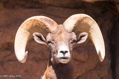 IMG_2991.jpg (ashleyrm) Tags: travel arizona museum sonora desert tucson tucsonarizona