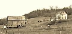 Barn and Hillside sepia (Neal3K) Tags: ohio field sepia barn rust