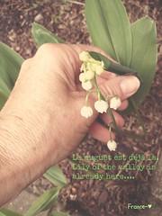 Bientt le mois de mai. (France-) Tags: canada fleur vancouver spring hand bc main pnw muguet printemps lilyofthevalley