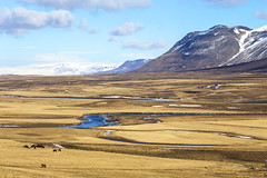 Fields and mountains, Western Iceland (Gabriela Iacobuta) Tags: horses horse mountain snow water grass yellow clouds river flow spring north dry 5photosaday