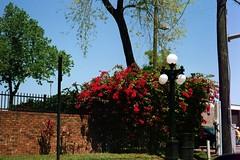 7_0008 (myrockethasnobrakes) Tags: city urban tampa landscape florida historic ybor yborcity gaybor historicybor