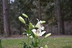 1 (MK1_PhotographiX) Tags: germany botanical outdoors sommer natur blüte landschaft blüten naturelovers gewächse flowerpic happyflowers blütenpracht heimatliebe wiesenundfelder flowersphotography flowerspam deutschlanddubistschön