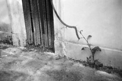 Frosinone, 10/04/2016 (Marcello Iannotta) Tags: film 35mm photography monocromo blackwhite nikon kodaktmax400 biancoenero l35af surreale filmsnotdead
