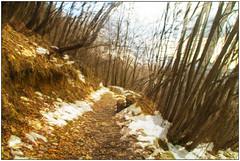 Bosco - Woods (Matteo Bersani) Tags: trees winter shadow alberi woods ombre neve movimento sentiero inverno confusion movment lecco bosco confusione a58 montagnamountain paith sonyalphaitalia naturanaturalmentenature