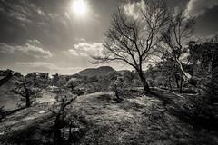 Kinkaku-Ji B&W (ErikFromCanada) Tags: blackandwhite bw castle japan sepia blackwhite kyoto hill kinkakuji sunstar