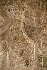escarment.2 (rana.way) Tags: trees river rivers escarpment