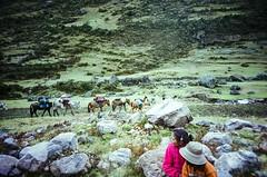 Horse Packing (hiphopmilk) Tags: horse mountain green film peru grass animal machu picchu inca cuzco analog america creek trekking trek 35mm lomo lca lomography fuji village sheep hiking packing cusco south meadow hike per inka vale trail pack valley brook analogue aboriginal grassland cancha lares urubamba indigenous paru acp quechua calca hatun 135film ayllu cuncani queua urupampa urqu jaredyeh hiphopmilk chiqun qhapaqsaya pumawanka siriwani