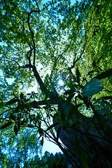 Green-tree (yoshikazu kuboniwa) Tags: trees mountain tree green nature colors beautiful leaves japan forest garden season asian religious outdoors temple japanese ancient shrine asia buddhist religion seasonal scenic buddhism scene location historic sacred serene
