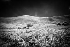 (jrseikaly) Tags: white mountain black tree nature jack photography infrared arz cedars seikaly jrseikaly